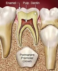 pulp-therapy-in-primary-teeth